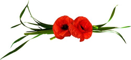 COQUELICOT-BARRE-268.png